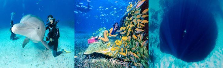 bahamas voyage séjour plongée globe travel