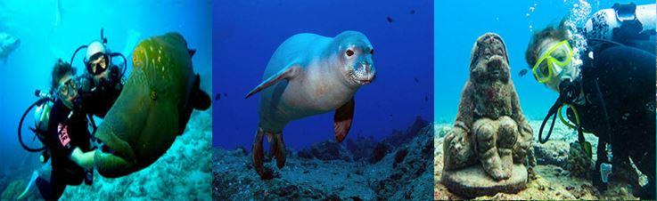 voyage vacances hawai waikiki, snorkelling, plongée, globe travel