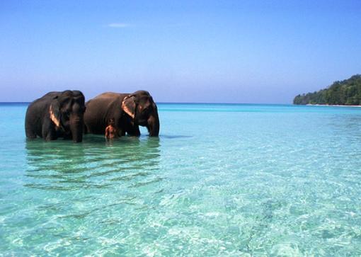 voyage sri lanka, voyage organisé, voyage sur mesure, negombo, plages, mer, globe travel