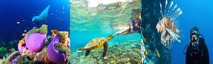 voyage maldives atoll nord hotel vols globe travel