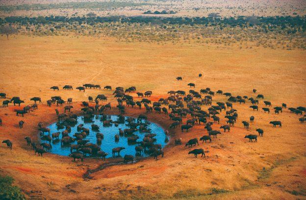globe travel voyage tanzanie lodge safari zanzibar