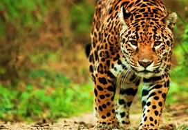 brésil nature voyage safari