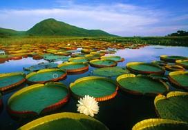 pantanal circuit voyage safari animaux