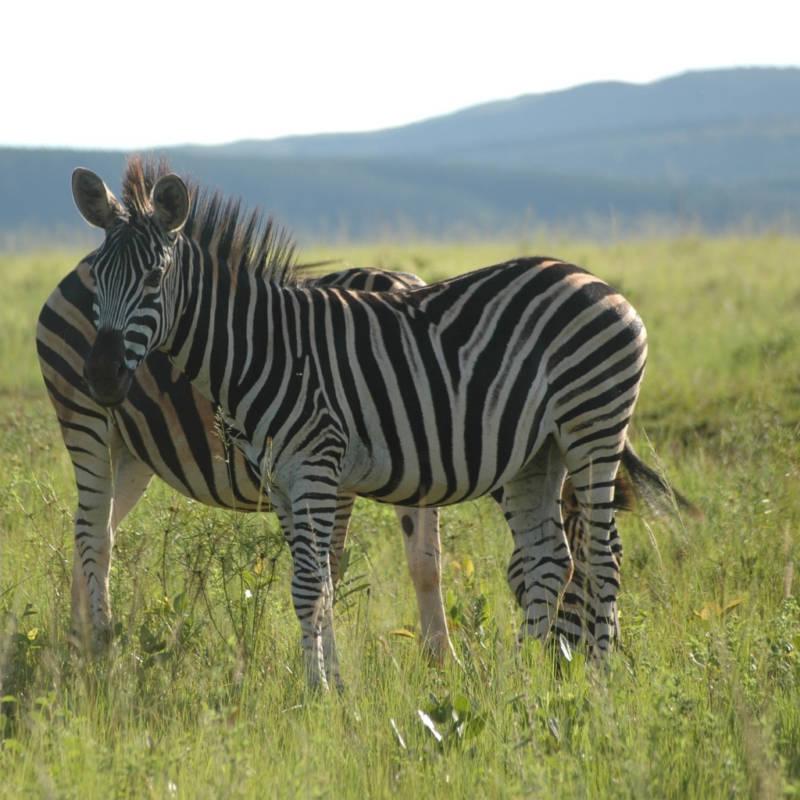 voyage-Afrique-du-Sud-Globe-Travel-reserve