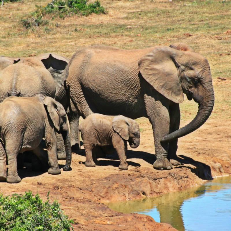 voyage-Afrique-du-Sud-Globe-Travel-parc-kruger