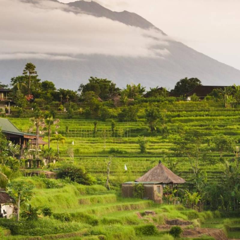 voyage-bali-indonesie-globe-travel-riziere-sidemen