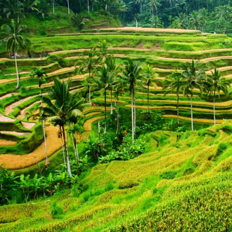 voyage-bali-indonesie-globe-travel-riziere