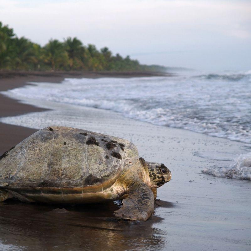 globe-travel-voyage-costa-rica-tortuguero