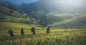 voyage au Vietnam dans les rizières