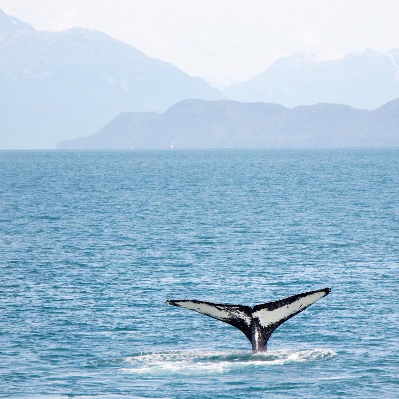 baleine-sejour-canada-road-trip
