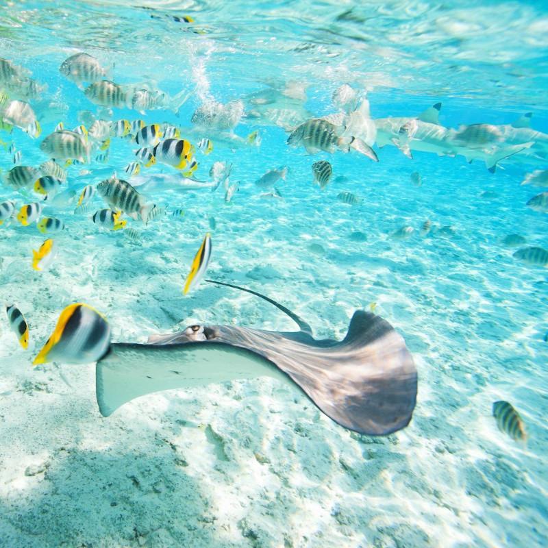 voyage-globe-travel-circuit-polynesie-snorkeling