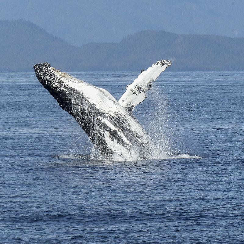 globe-travel-voyage-baleine-canada